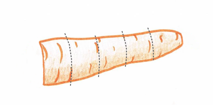Hand drawing of a carrot showing cutting guidelines (grey dotted lines)