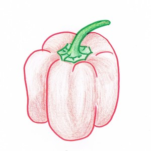 Hand drawing of a red bell pepper