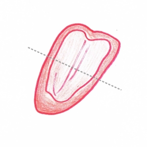 Hand drawing of a quartered red pepper showing cutting guidelines (grey dotted lines)