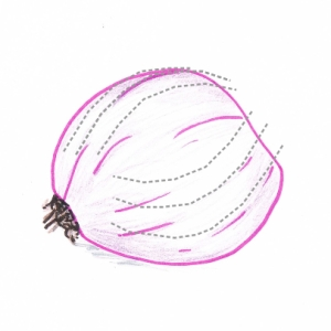Hand drawing of half a red onion with cutting guidelines (grey dotted lines)