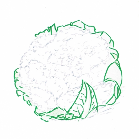 Hand drawing of a head of cauliflower with outer leaves attached