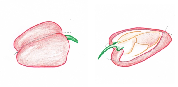 Hand drawings of red bell pepper half and quarter with cutting guidelines (grey dotted lines)