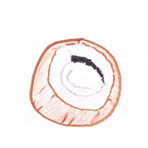 Hand drawing of the cap of a chestnut mushroom, showing the inside