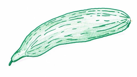 Hand drawing of a dark green cucumber