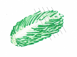 Hand drawing of a pile of lettuce leaves with cutting guidelines (grey dotted lines)