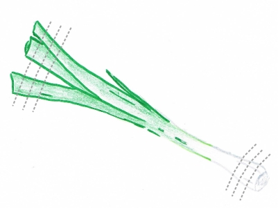 Hand drawing of a trimmed spring onion with cutting guidelines (grey dotted lines)