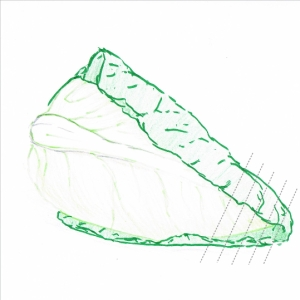 Hand drawing of a sweetheart cabbage with cutting guidelines (grey dotted lines)