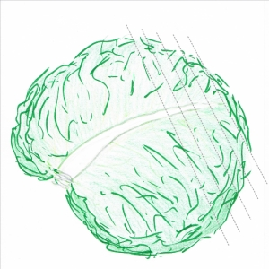 Hand drawing of a pile of cabbage leaves with cutting guidelines (grey dotted lines)