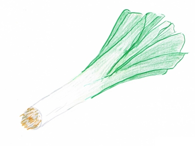Hand drawing of a green and white leek