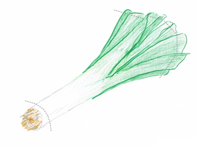 Hand drawing of a green and white leek with cutting guidelines (grey dotted lines)